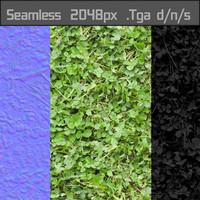 Grass Clover Texture Seamless