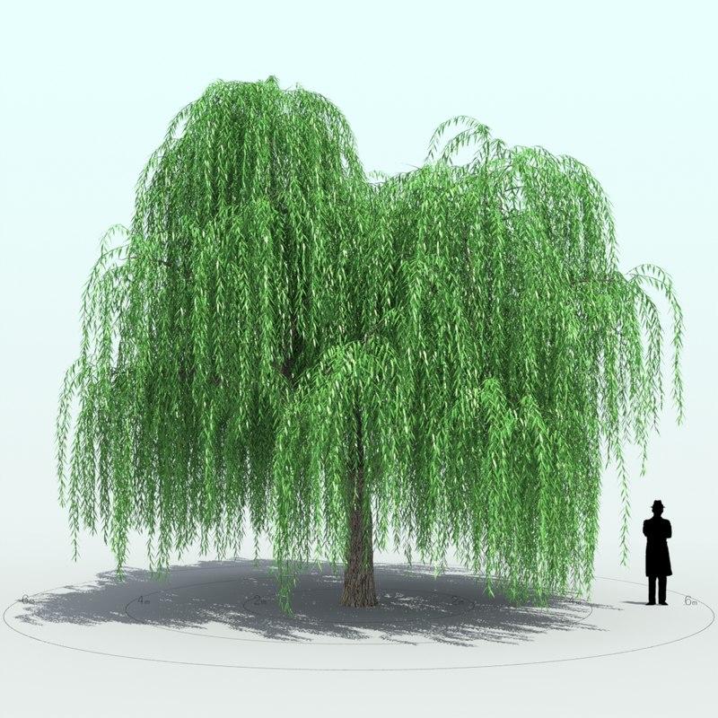 willow tree 3d x