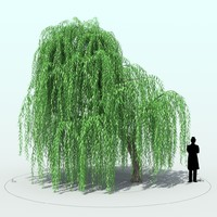 willow tree 3d x