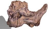 branch rotten wood 3d model