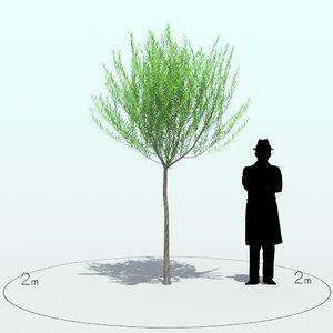 willow tree x