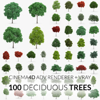 Deciduous Trees Collection - 100 Trees - C4D
