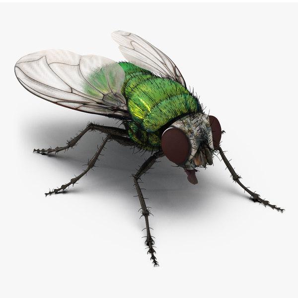 max green bottle fly fur