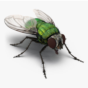 max green bottle fly fur