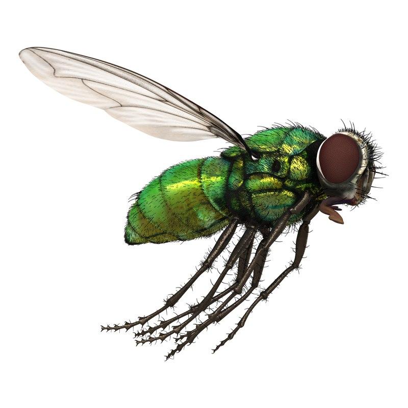 3d green bottle fly pose