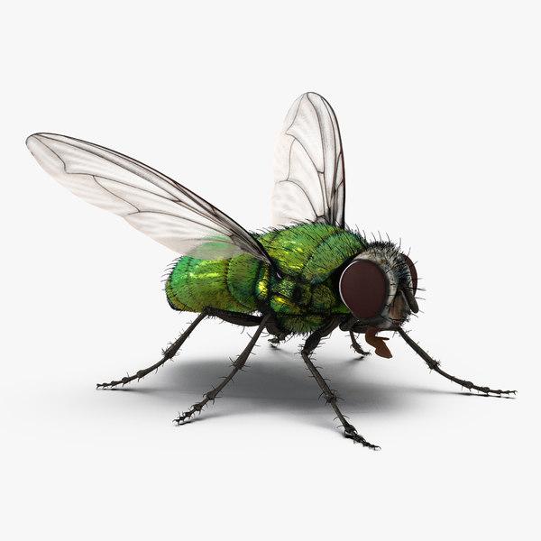 green bottle fly rigged 3d model