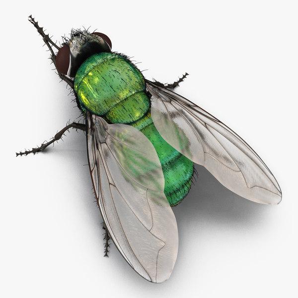 3d green bottle fly pose model
