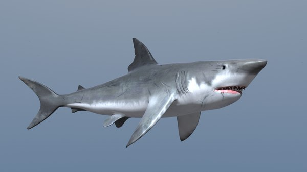 Animated Shark 3D Models for Download | TurboSquid