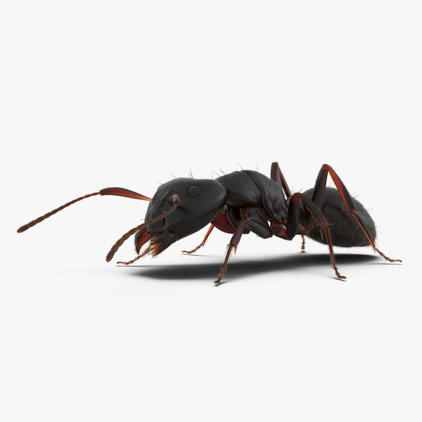 3d model black ant fur pose