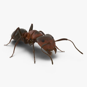 red ant fur pose 3d model