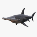 hammerhead shark 3D models