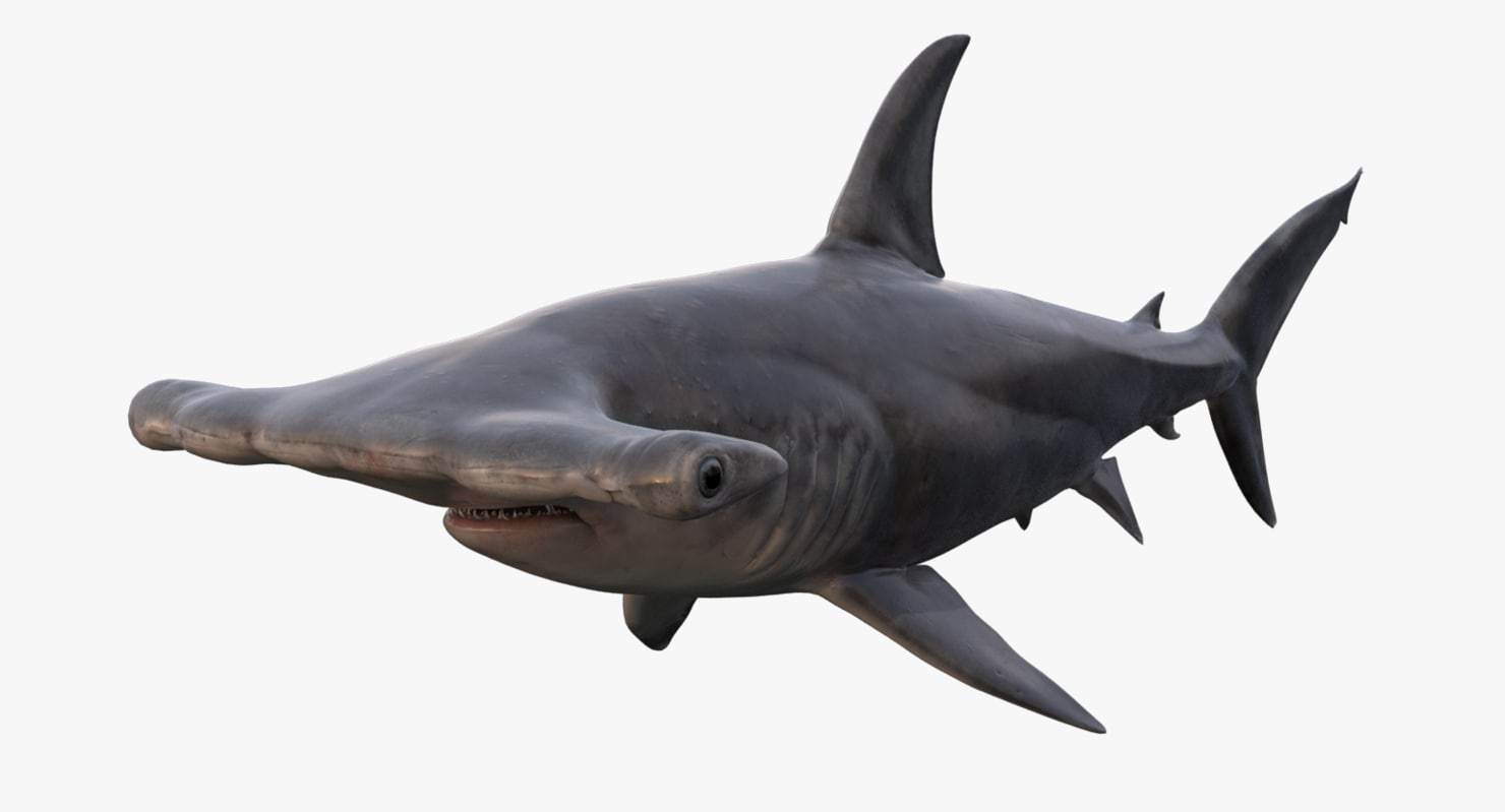 realistic hammerhead shark 3d model