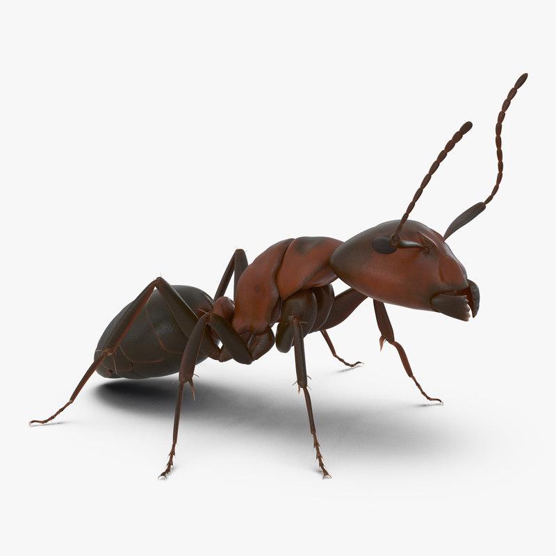 red ant pose 2 c4d