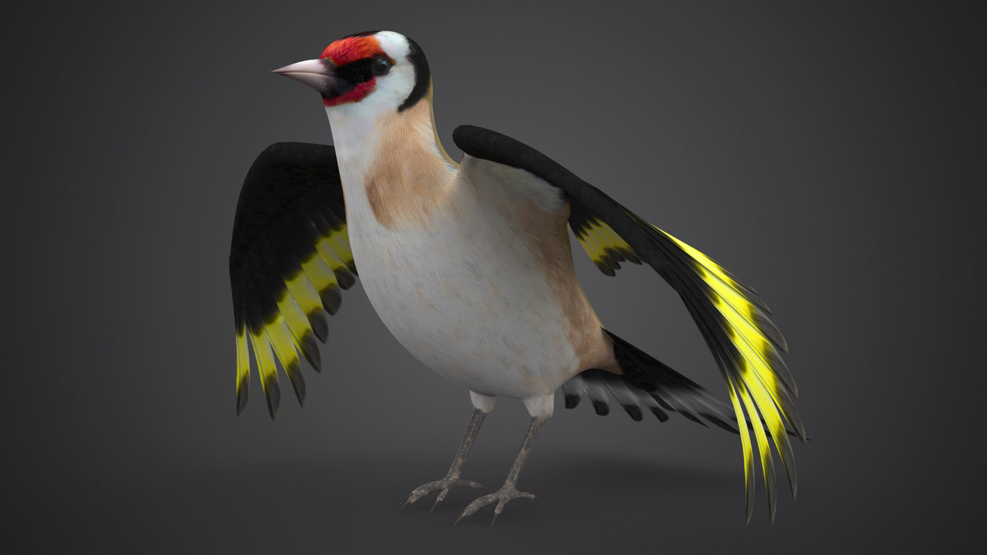 3d pintassilgo bird
