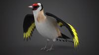 3d pintassilgo bird