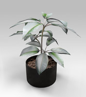 pipal plant 3d model