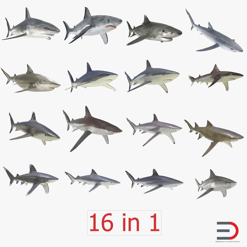 3d model of sharks 2