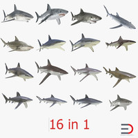 Sharks Collection 2