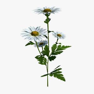 chamomile flower 3d model