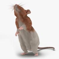 3d model rat 3 pose 2