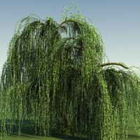 WEEPING WILLOW TREE 01