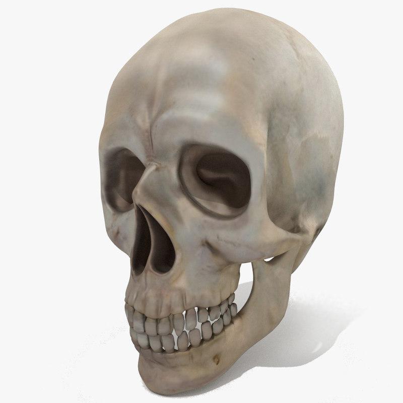 3d 3ds skull skeleton