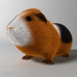3ds realistic guinea pig rigged