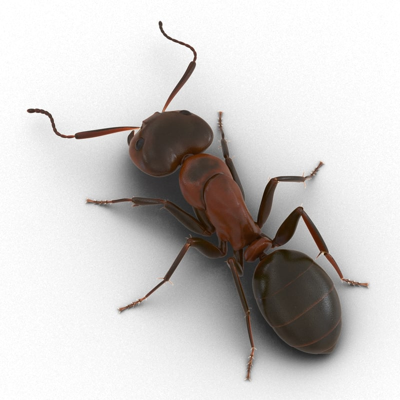 3d red ant pose 3