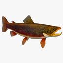 trout 3D models