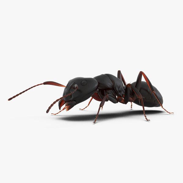 3d model black ant pose 3