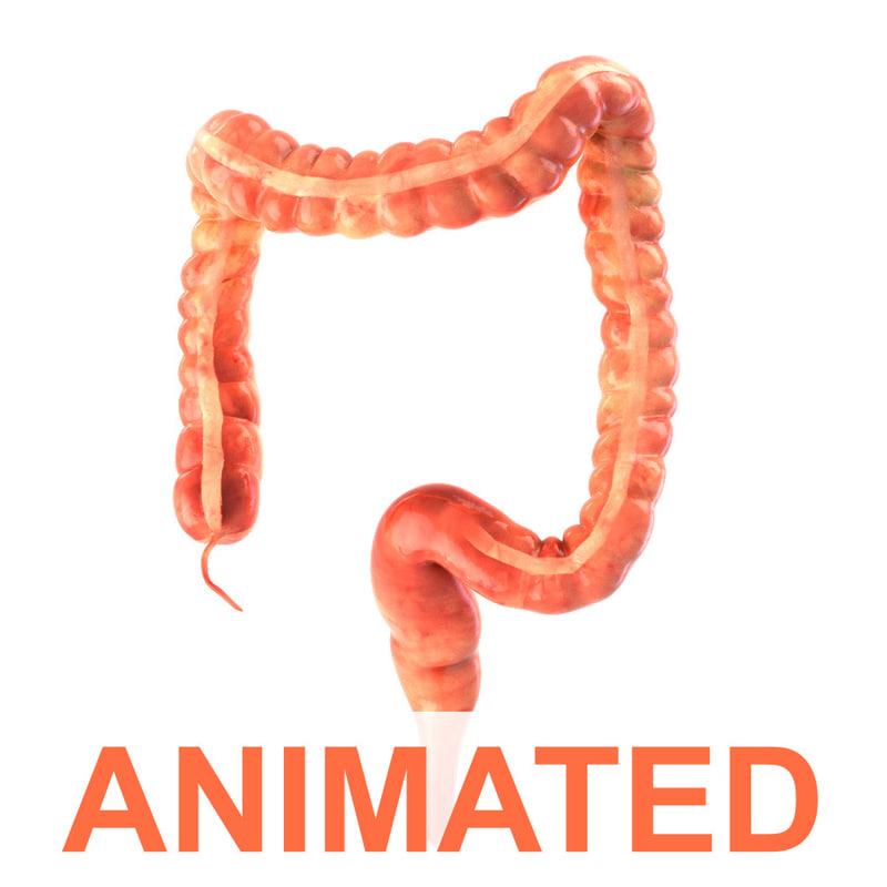 3d model human colon animation