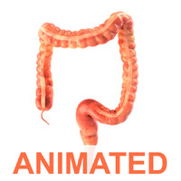 3d model human colon animation