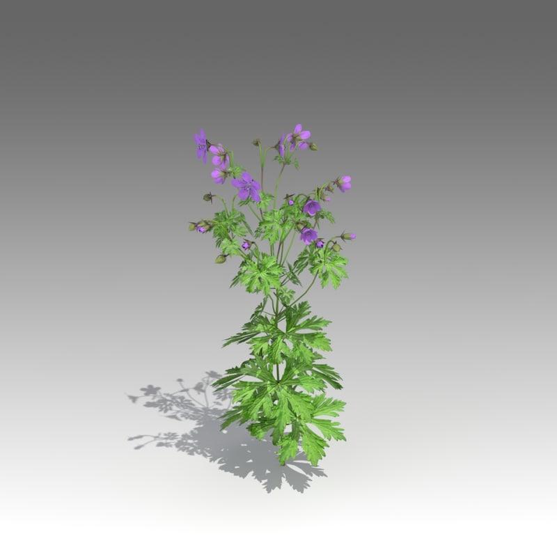geranium pratense 3d x
