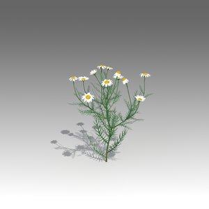 3d model matricaria flower