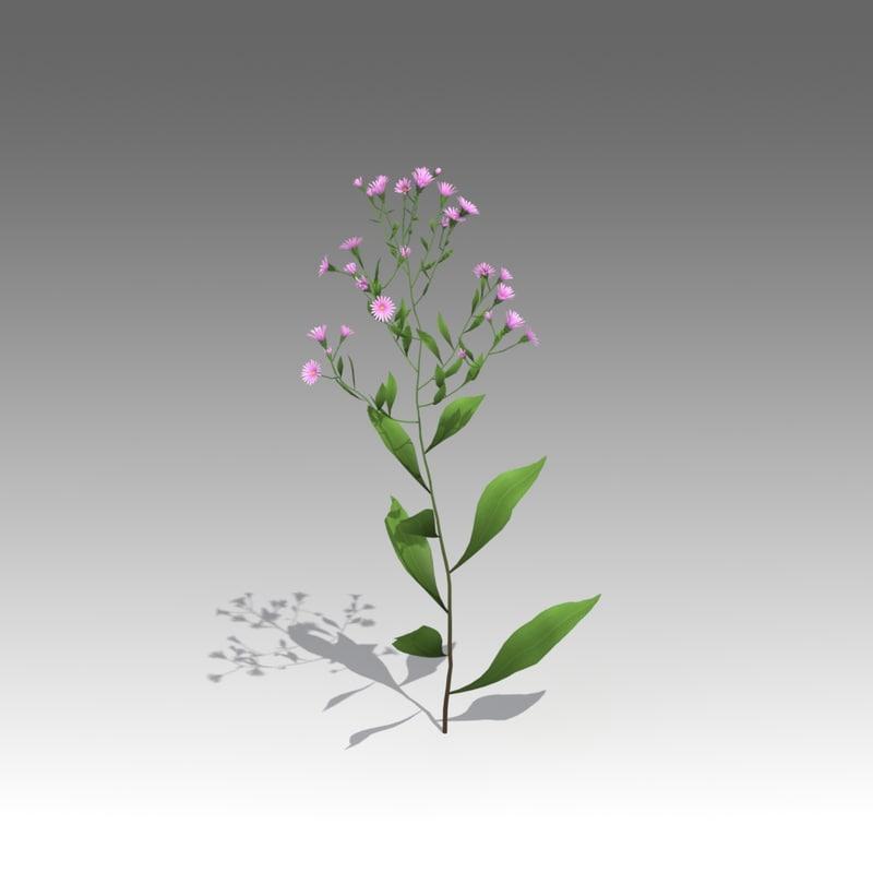 aster salignus flower 3d fbx