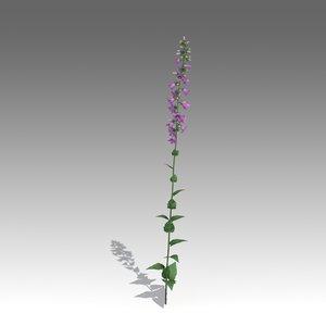 x campanulas flower