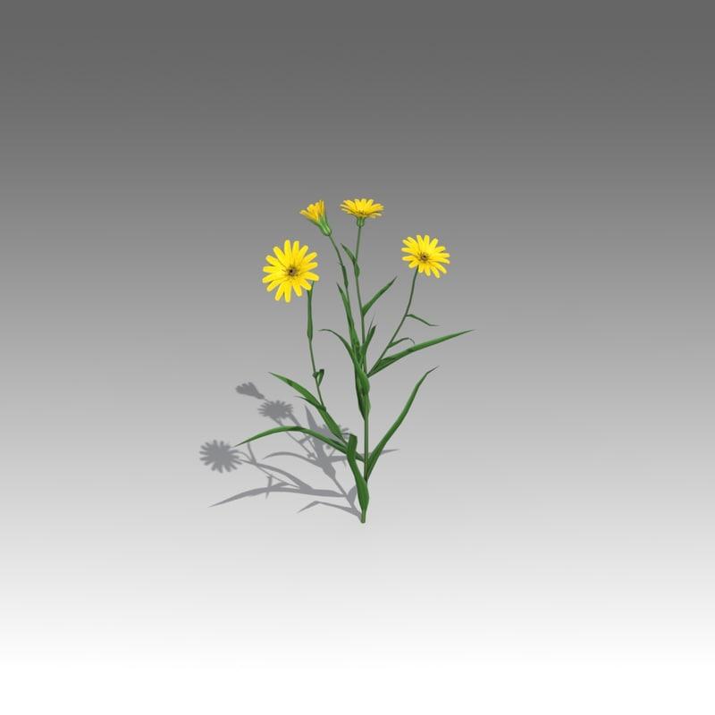 3d tragopogon pratensis