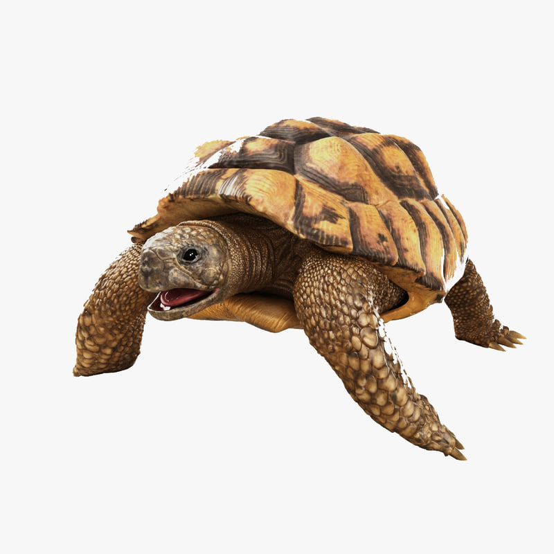 3d greek turtle