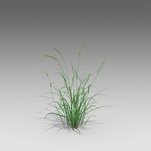 3d annual ryegrass grass model