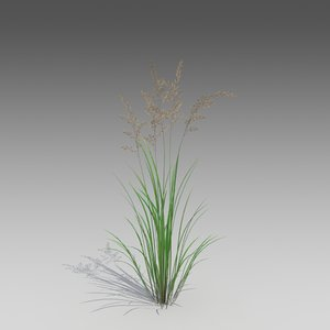 3d model brome common grass