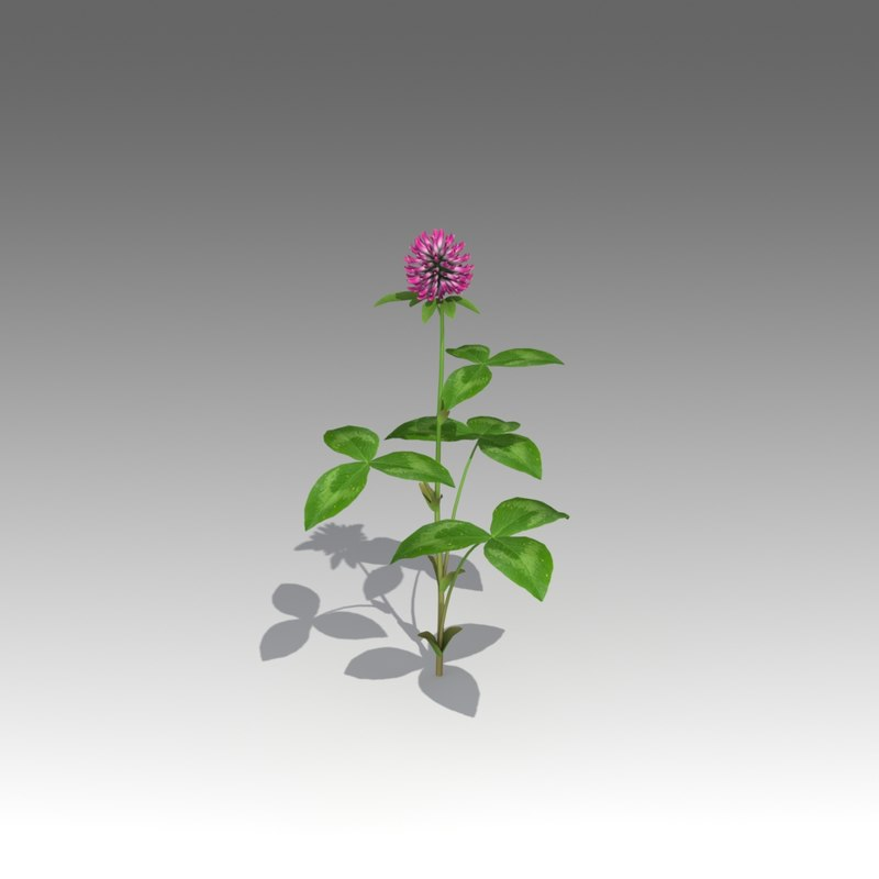 trifolium flower 3d fbx