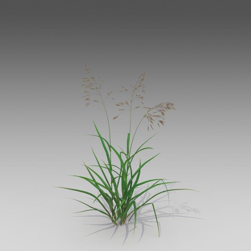 3d brome smooth grass