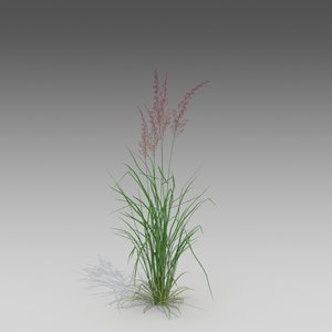 3d model feather plant