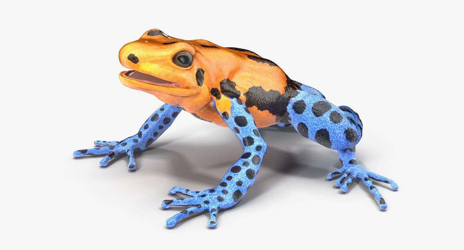 3d model poison dart frog orange
