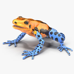 3d model poison dart frog orange
