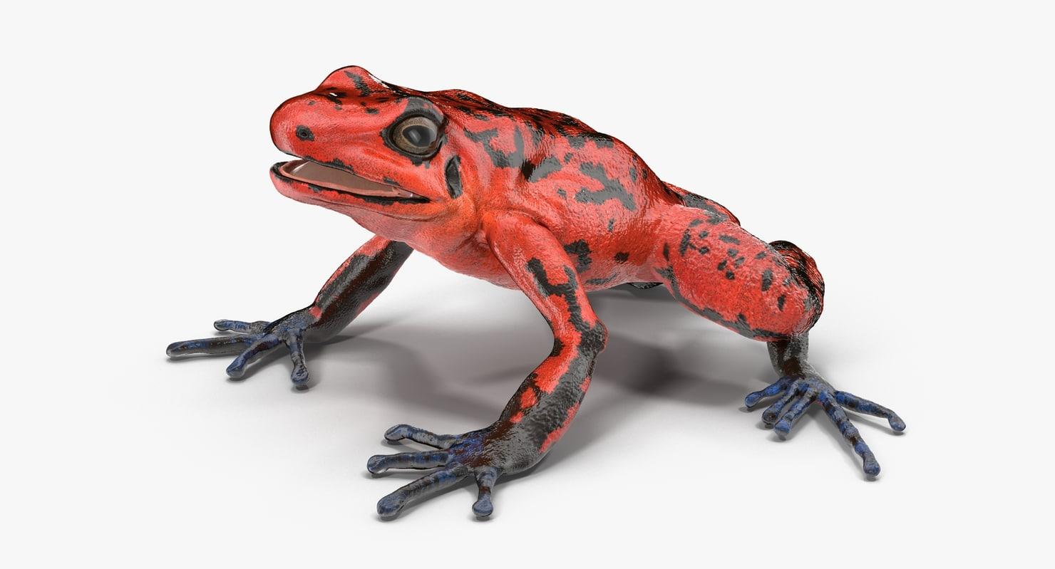 poison dart frog red 3d c4d