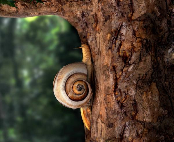 3d snail