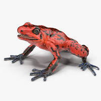 poison dart frog red 3d c4d