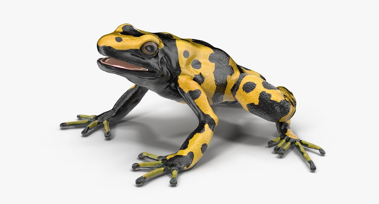 3d poison dart frog yellow model