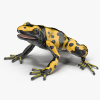 3d poison dart frog yellow model